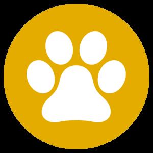 Sophie Kunterbunt Startseite Hund