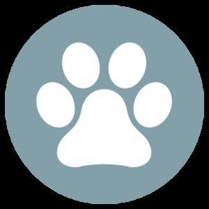 Sophie Kunterbunt Startseite Hund2