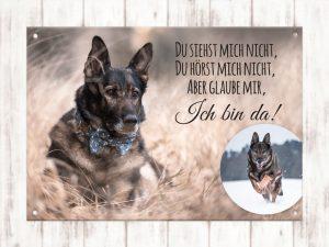 Collage Hund