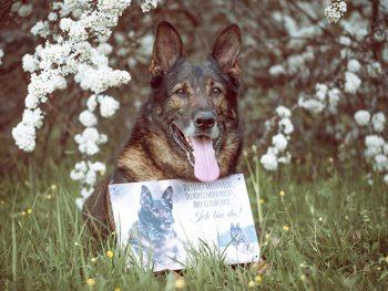 SophieKunterbunt Shop Boxenschild Hundeschild