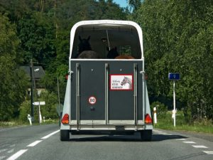 Vehicle For The Transport Of Horses Goes On Road