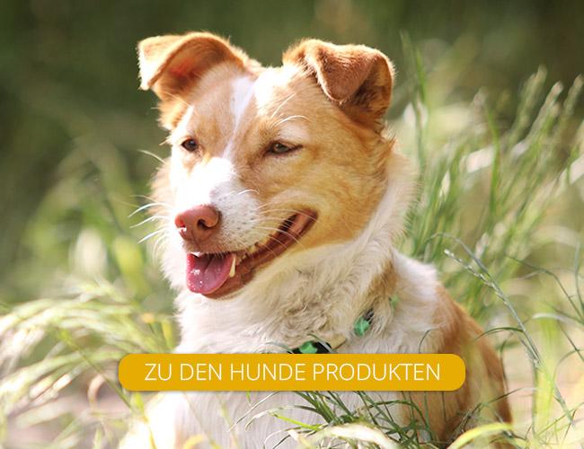 Sophie Kunterbunt Hunderschilder