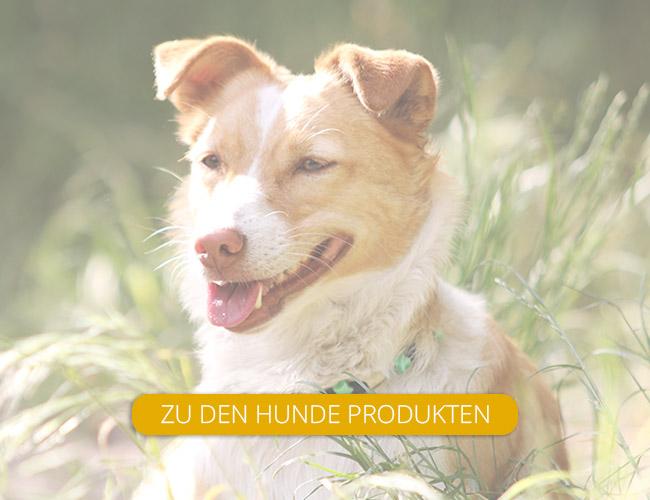 Sophie Kunterbunt Hunderschilder2